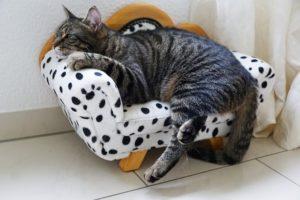 couchsurfing als alternative übernachtung